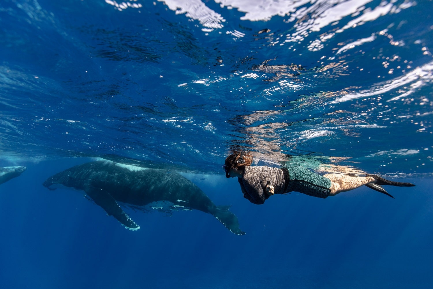 A woman swimming with whales